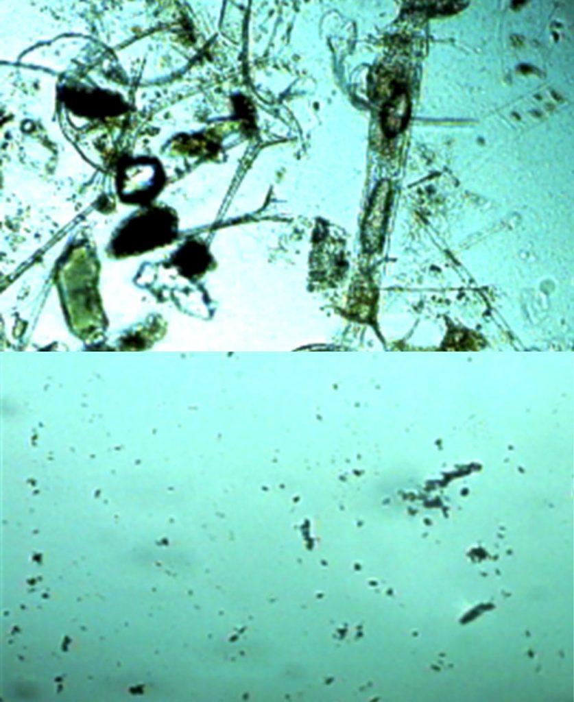 Vannbehandling - Plankton før og etter trykk-vakum